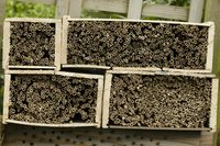 Rietmatten bijenhotel maken