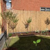 Rietmatten 180 cm tuin